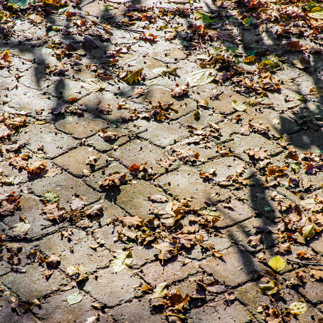 """Cobblestones covered by autumn leaves under the tepid sun"" stock image"