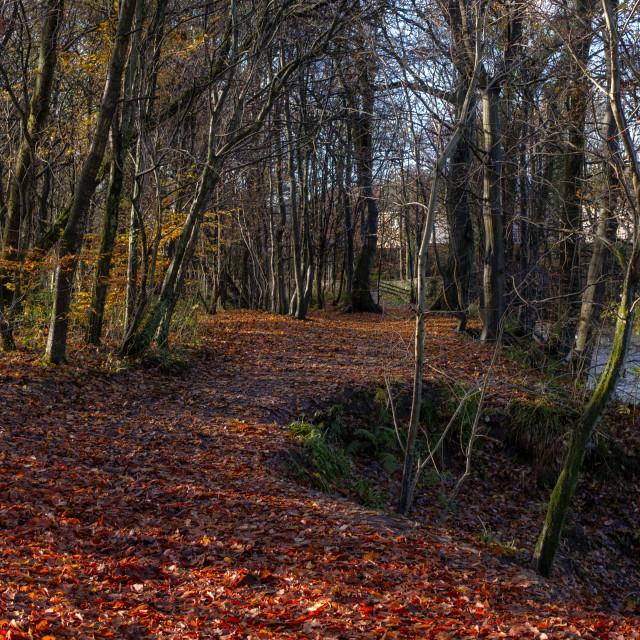 """A walk in Clackmannan"" stock image"