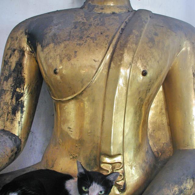 """Cat and Buddha"" stock image"