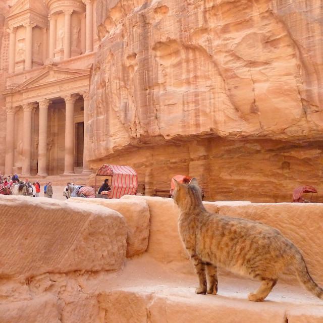 """""""Petra cat"""" stock image"""