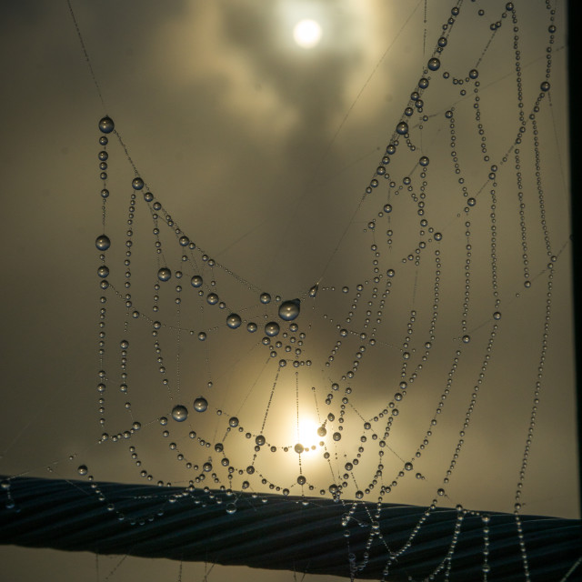 """Foggy Webs"" stock image"