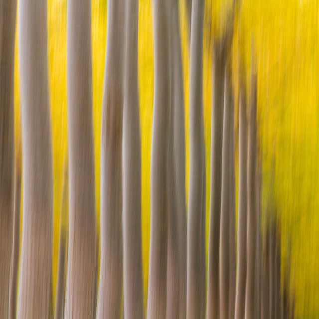 """Autumn Blur"" stock image"
