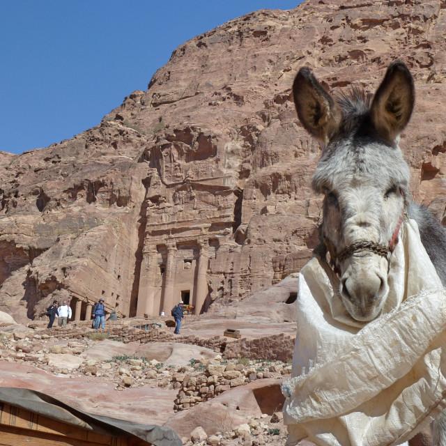 """""""Petra Donkey"""" stock image"""