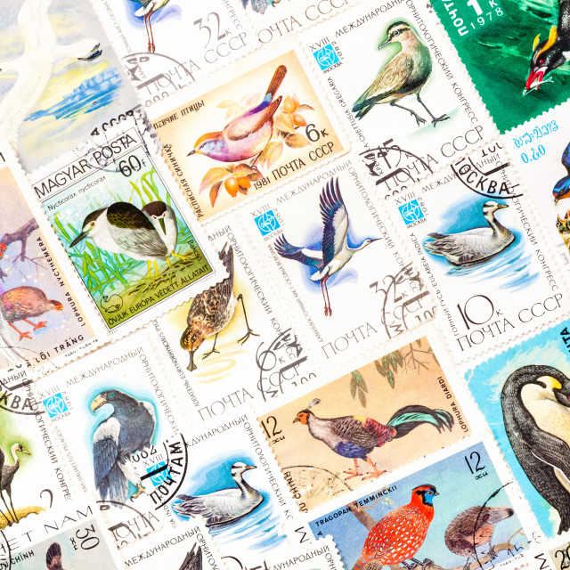 """""""Stamps Printed In The Ussr, United By One Theme - """"Wild Birds"""", Arranged..."""" stock image"""
