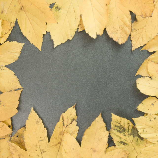 """autumnal theme backdrops"" stock image"