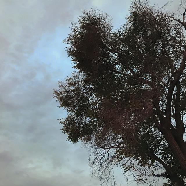 """Dramatic Tree and Sky"" stock image"