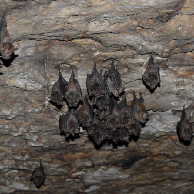 """Bats"" stock image"