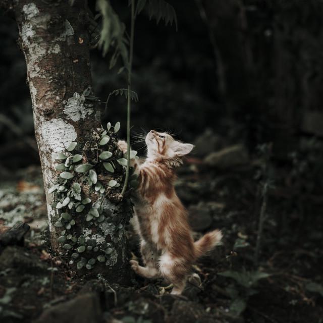 """cute little cat"" stock image"