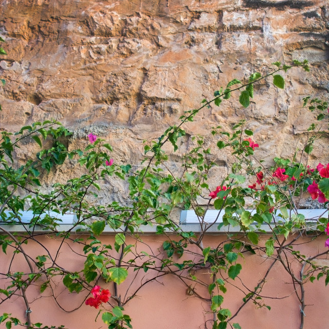 """""""Flower stone wall background"""" stock image"""