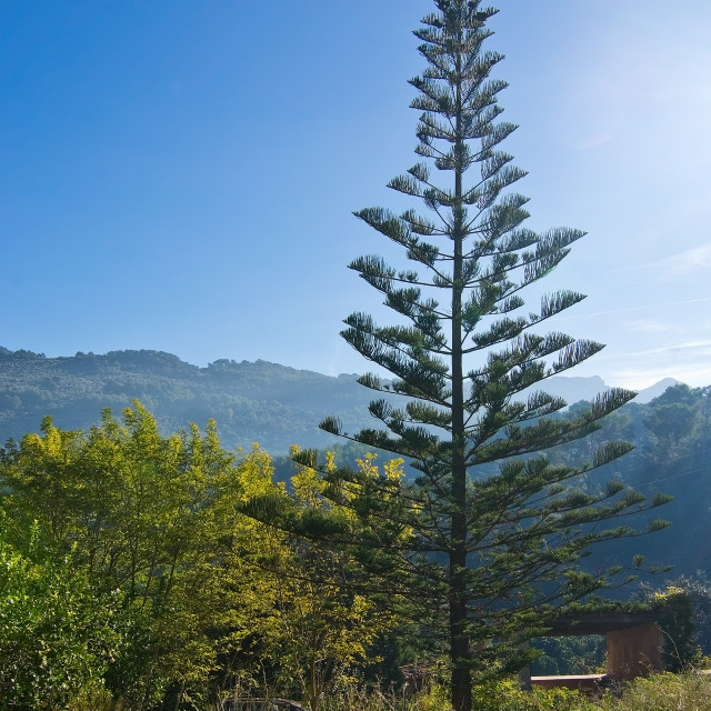 """""""Sunny Mallorca landscape Soller"""" stock image"""