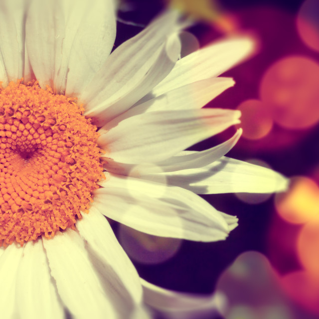 """Daisy abstract background"" stock image"