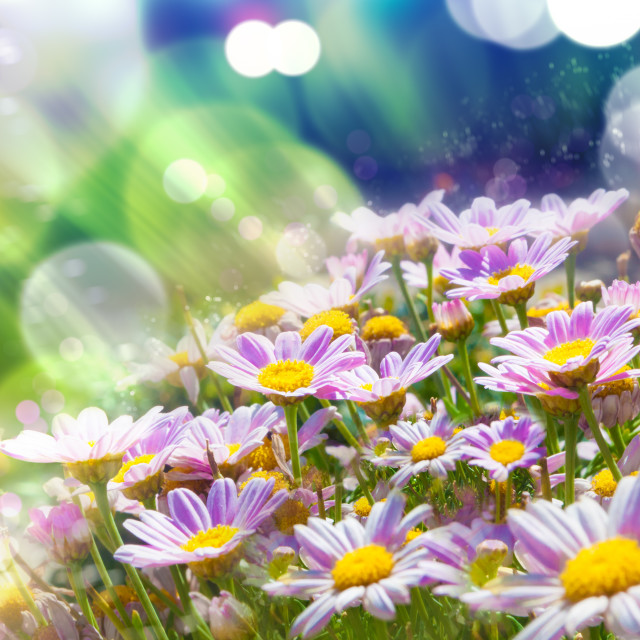 """Spring flowering meadows and sunbeam background"" stock image"
