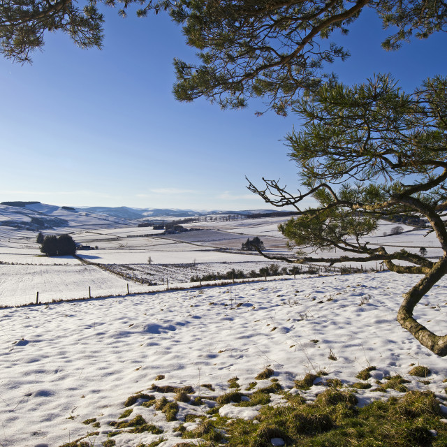 """Above Donside Winter"" stock image"
