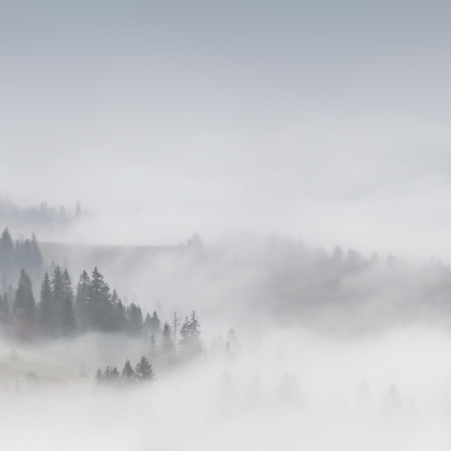 """Panorama of forest covered by low clouds. Autumn rain and fog"" stock image"