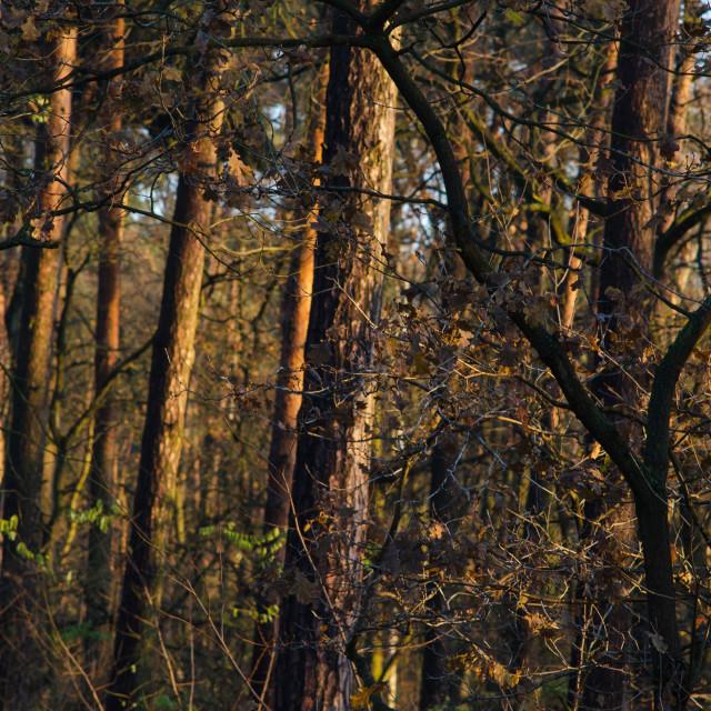 """""""Forest awakening"""" stock image"""