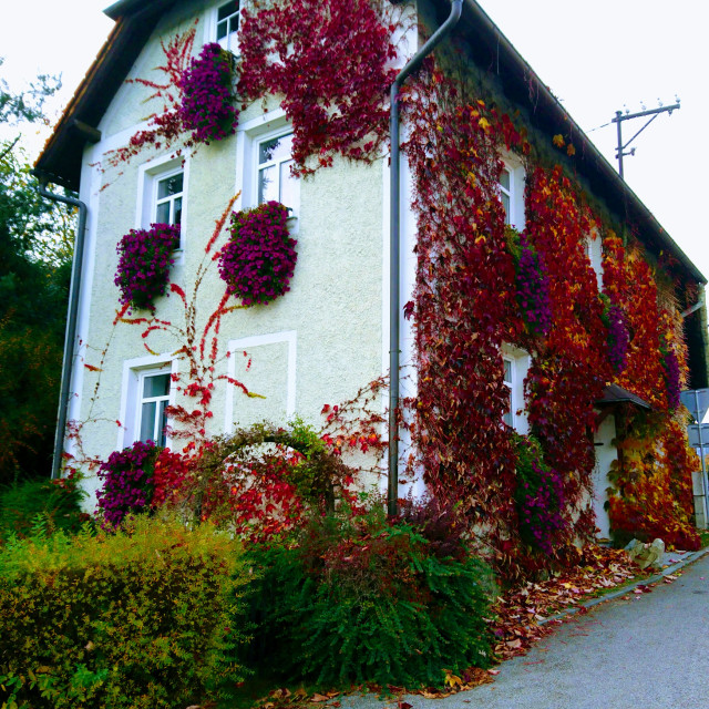 """Autumn colors on a village house"" stock image"