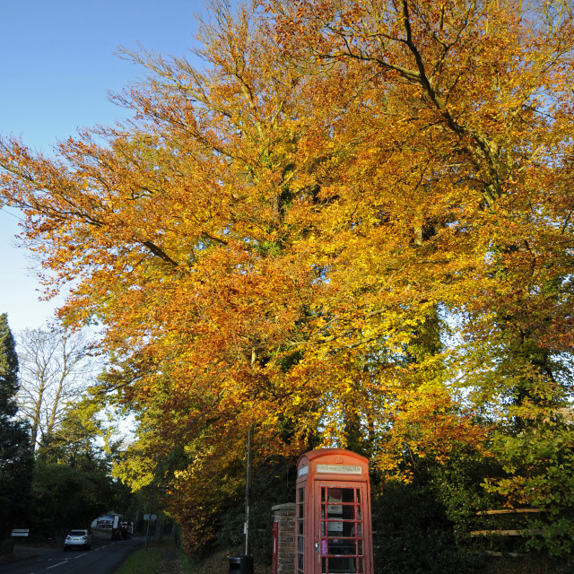 """Autumn Trees and Red Telephone Box Sevenoaks Kent England"" stock image"