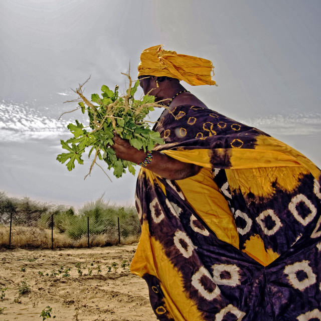 """Fatimata in the village garden, Timbuktu, West Africa"" stock image"