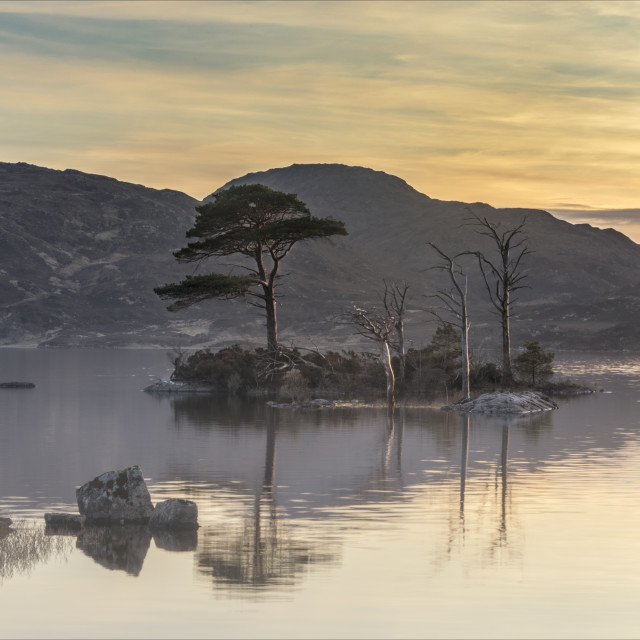 """Island trees in Lock Assynt"" stock image"