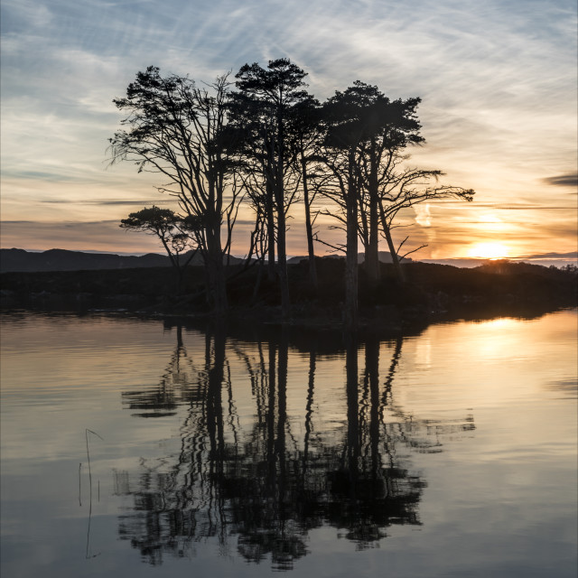"""Sunset trees at Loch Assynt"" stock image"