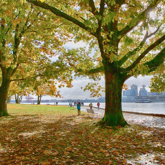 """""""Stanley Park Autumn Colours"""" stock image"""