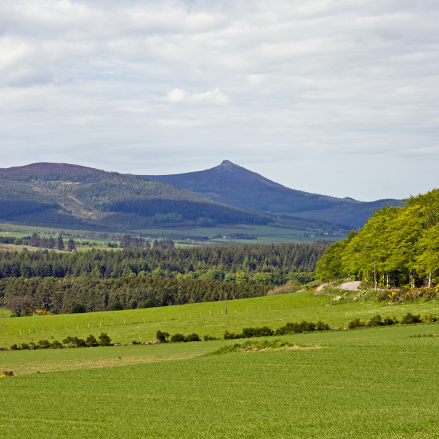 """Bennachie above Millbank"" stock image"