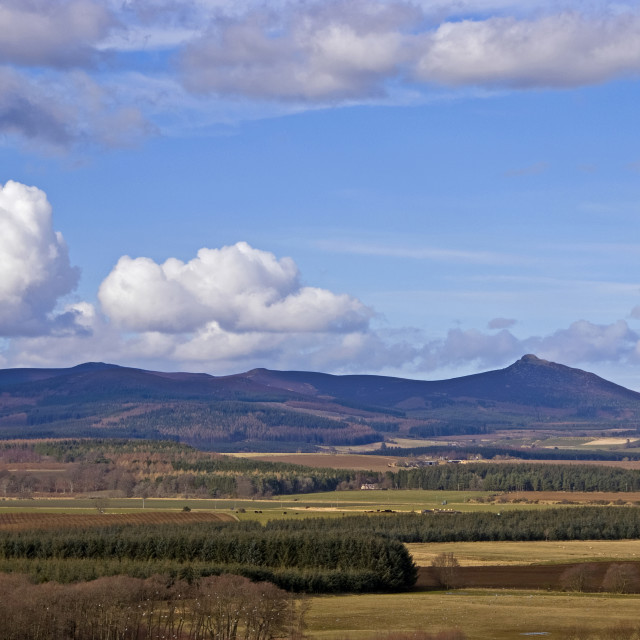 """Bennachie Backhill Spring"" stock image"