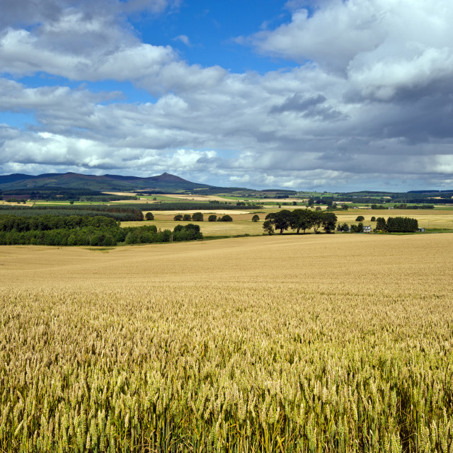 """Bennachie fm Backhill"" stock image"