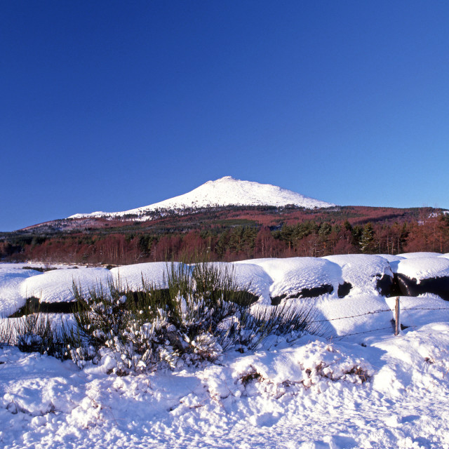 """Bennachie Winter"" stock image"