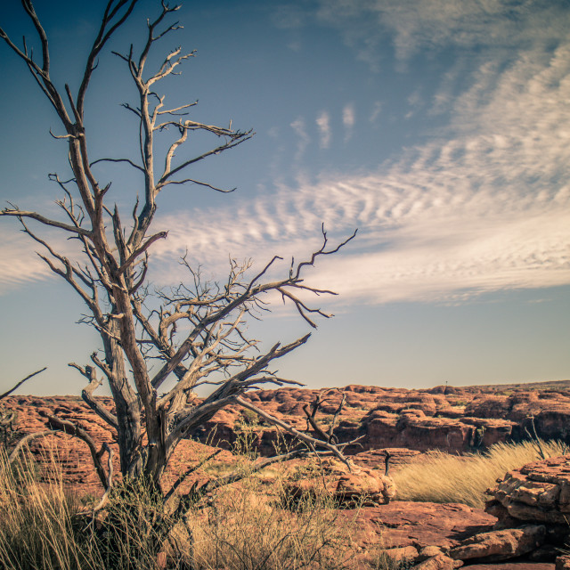 """""""There is still life in the Outback"""" stock image"""