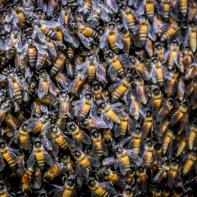 """Bees Bees Bees"" stock image"