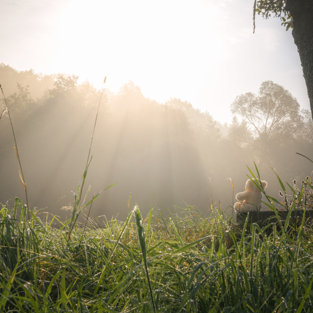 """Morning sun rays and teddy bear"" stock image"