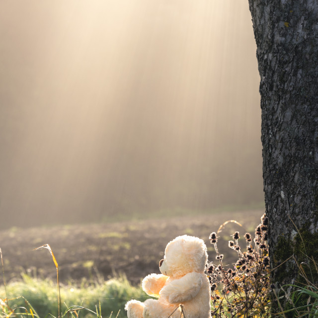 """Plus bear on a bench under sun rays"" stock image"