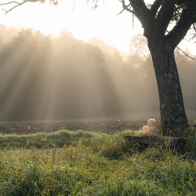 """""""Sun rays through the mist and a plush bear"""" stock image"""