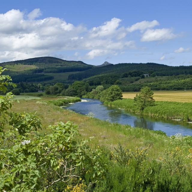 """Donside Forestry Farmland"" stock image"