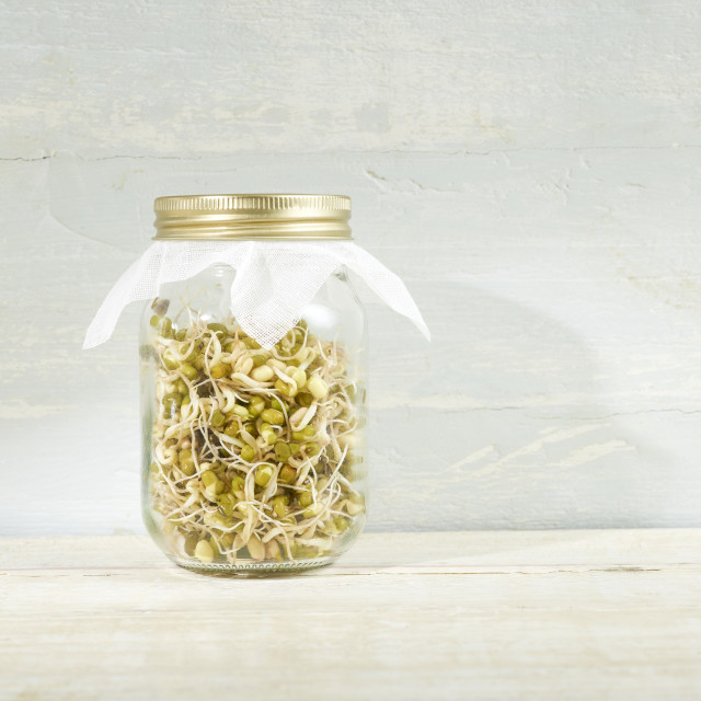 """""""Sprouting mung beans in a jar"""" stock image"""