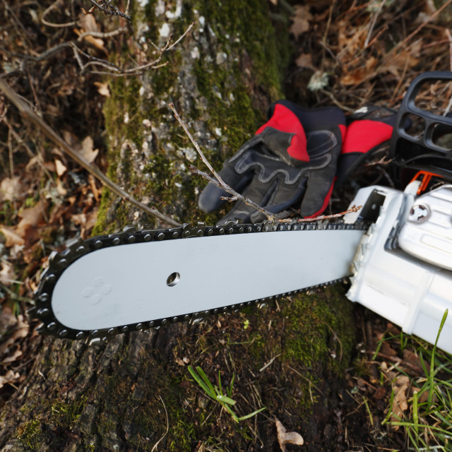 """""""Chainsaw and gloves"""" stock image"""