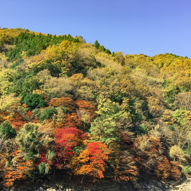 """Colorful autumn in Japan"" stock image"