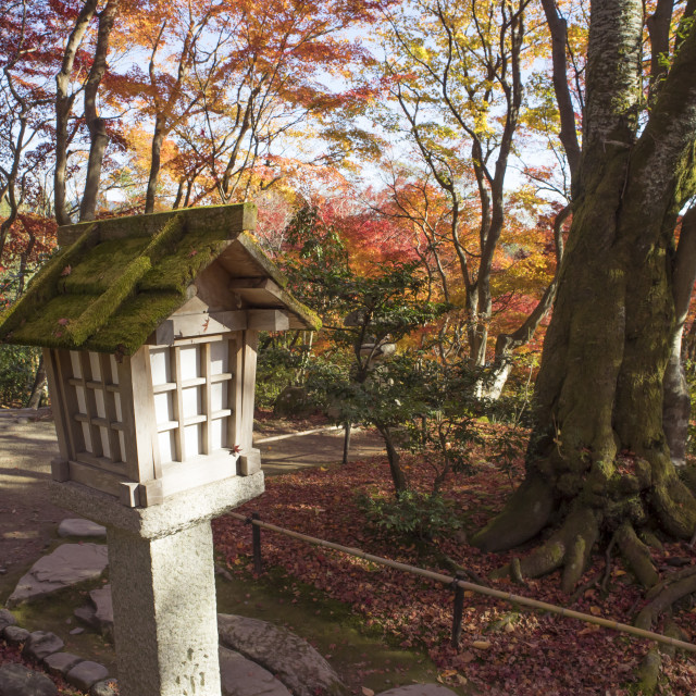 """""""Colorful autumn in Japan"""" stock image"""