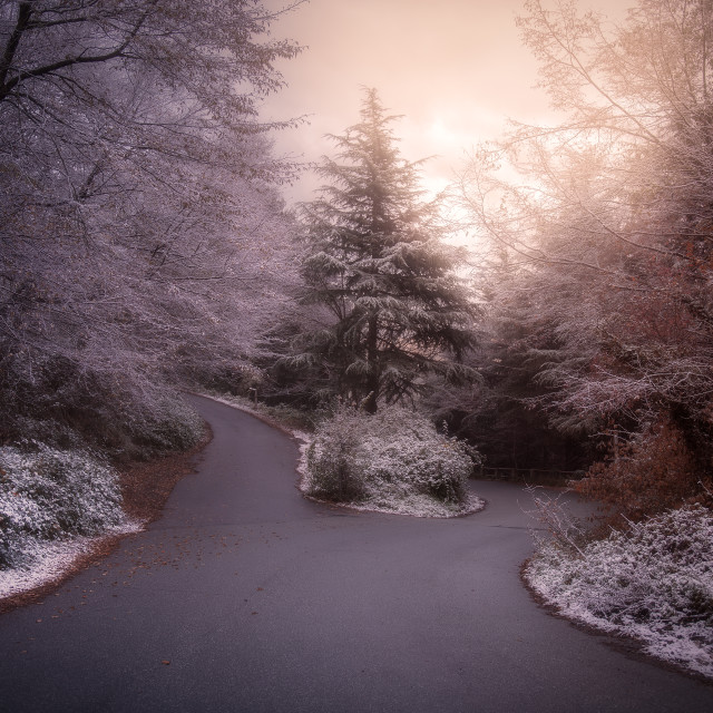 """The snow and its magic"" stock image"