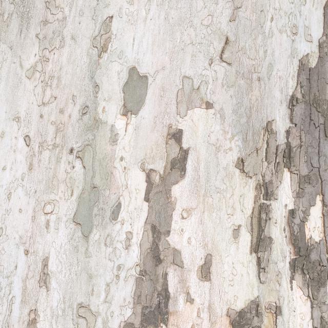"""Tree Bark Closeup"" stock image"
