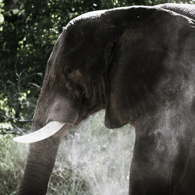 """Elephant in the bush"" stock image"
