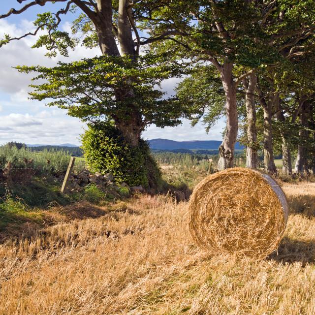 """Garlogie Farmland"" stock image"