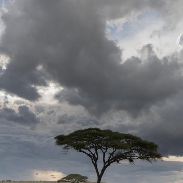 """A cloudy sky over the plains of Tsavo., Kenya."" stock image"