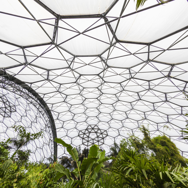 """""""Inside the tropical biome at the popular visitor attraction the Eden Project,..."""" stock image"""