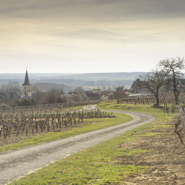 """""""Winter in the vineyards of Berrie, France."""" stock image"""