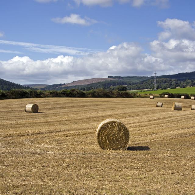 """Mearns Farmland"" stock image"