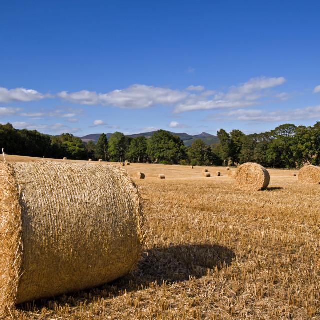 """Monymusk Harvest"" stock image"