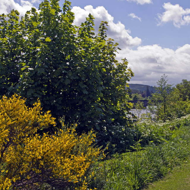 """""""River Dee Ballater"""" stock image"""