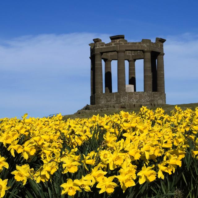 """Stonehaven Memorial Daffodils"" stock image"